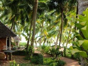 Wunderschöne Gartenhütten im Schatten der Kokospalmen direkt am Meer.